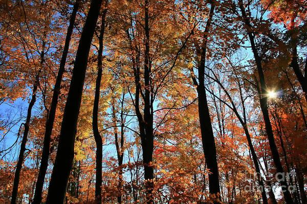Photograph - Glorious Fall by Karen Adams