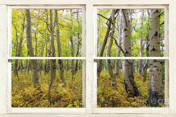 Wall Art - Photograph - Glorious Golden Forest Window View by James BO Insogna