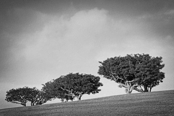 Photograph - Glorious Morning Bw by Theo O'Connor