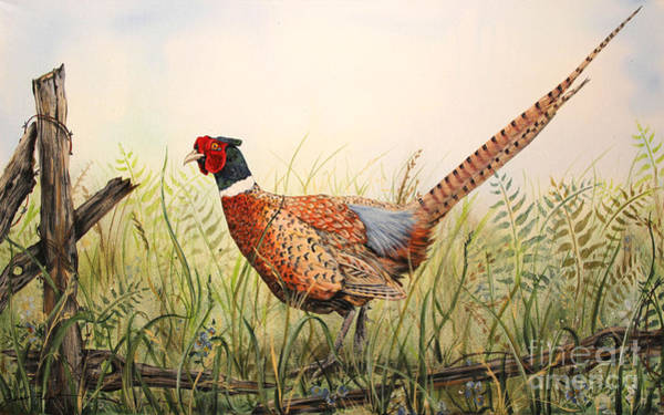 Wire Painting - Glorious Pheasant-1 by Jean Plout
