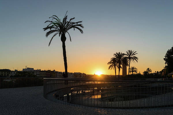 Photograph - Glorious Sevillian Sunset With Palms by Georgia Mizuleva