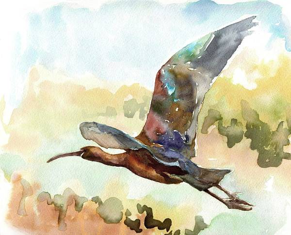 Painting - Glossy Ibis by Abby McBride