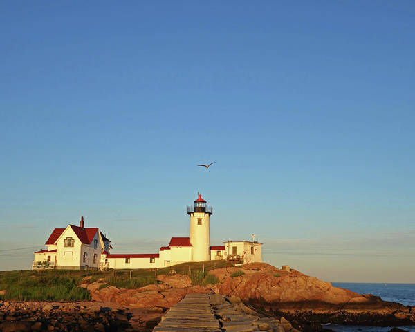 Photograph - Gloucester Ma Seagull Over The Eastern Point Lighthouse by Toby McGuire