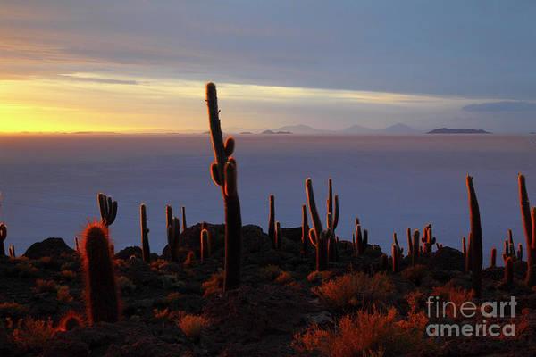Photograph - Glowing Cacti Salar De Uyuni Bolivia by James Brunker