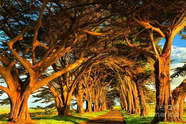 Photograph - Glowing Cypress by Adam Jewell
