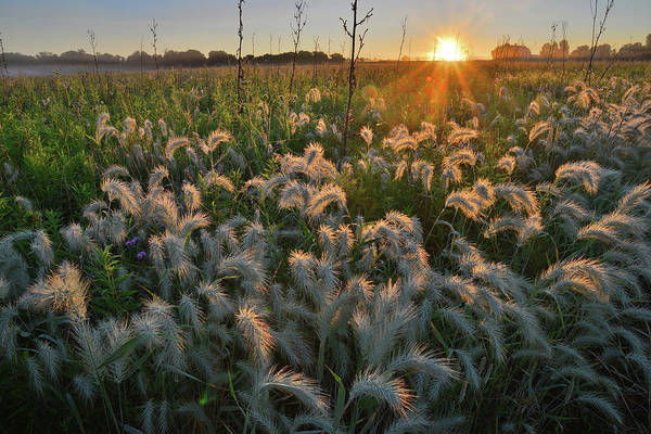 Photograph - Glowing Fox Tails Along Solon Road In Glacial Park by Ray Mathis