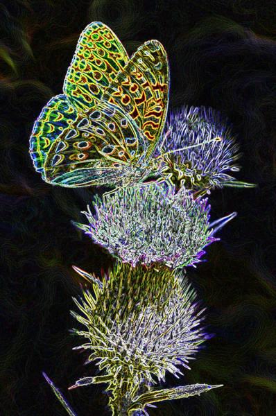 Butterfly On Flower Digital Art - Glowing Fritilary by Frank LaFerriere