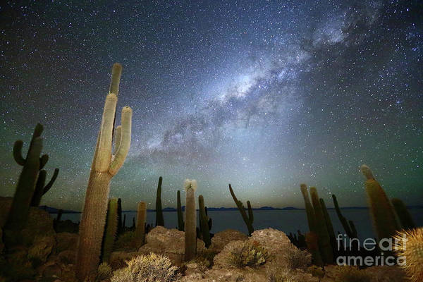 Photograph - Glowing Heavens Above Cacti On Incahuasi Island Bolivia by James Brunker