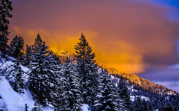 Photograph - Glowing In A Winter Sunset by Albert Seger