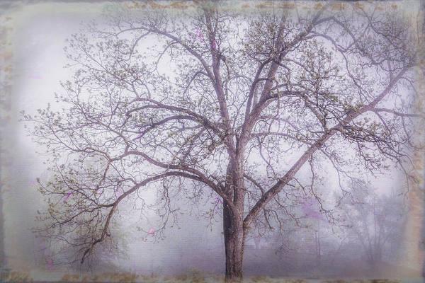 Lavender Mist Wall Art - Photograph - Glowing In Lavenders by Debra and Dave Vanderlaan