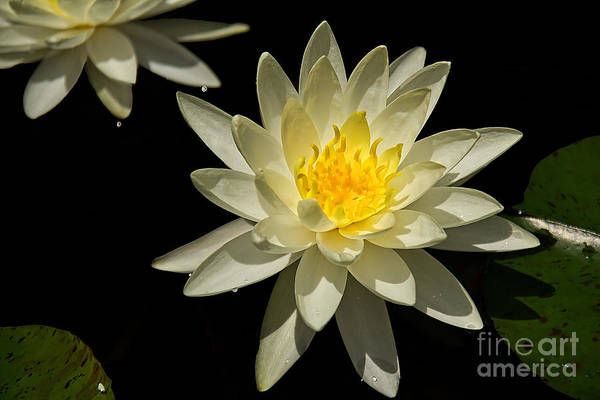 Photograph - Glowing by Jemmy Archer