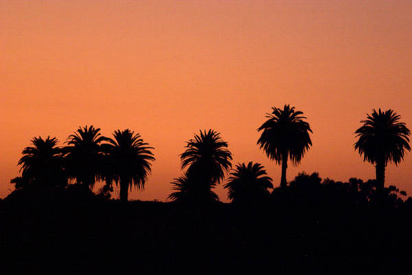 Photograph - Glowing Palms by Brad Scott