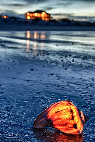 Photograph - Glowing Shell 7729 by Dan Beauvais