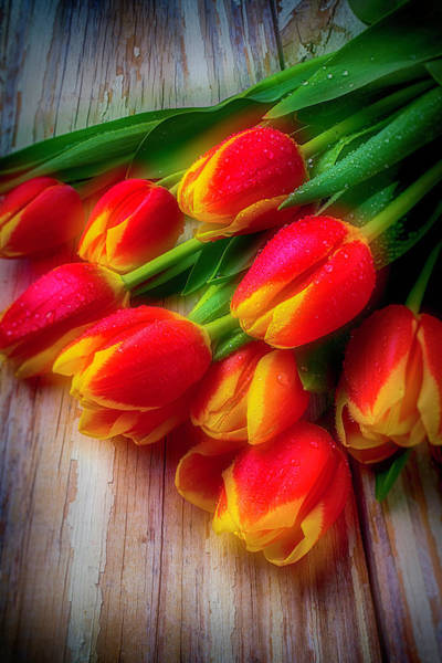 Paint Chips Photograph - Glowing Tulips by Garry Gay