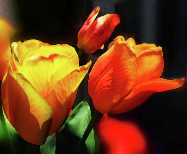 Museum Digital Art - Glowing Tulips Red And Yellow Bouquet  by Irina Sztukowski