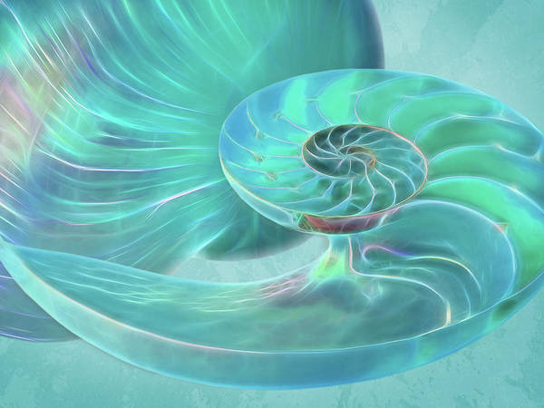 Photograph - Glowing Turquoise Nautilus Shell by Gill Billington