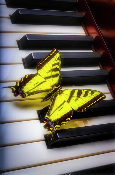 Wall Art - Photograph - Glowing Yellow Buttefly On Piano Keys by Garry Gay