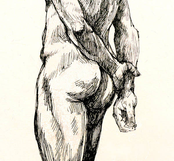 Male Nude Drawing - Gluteus Maximus by Roz McQuillan