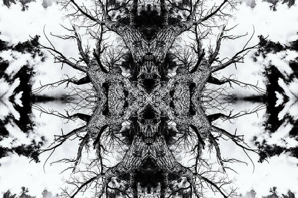 Photograph - Gnarled Sleep Of Forest Giant by John Williams