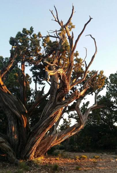 Photograph - Gnarly Old Tree by Sarah Marie