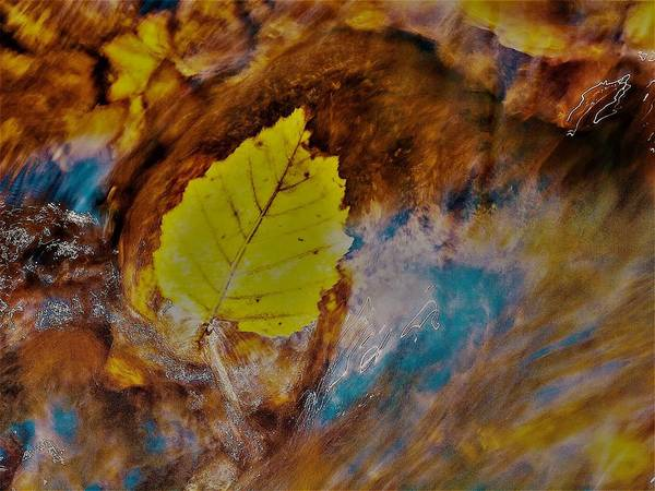 Photograph - Go With The Flow by Randy Sylvia