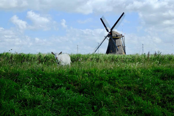 Photograph - Goat And Windmill by August Timmermans