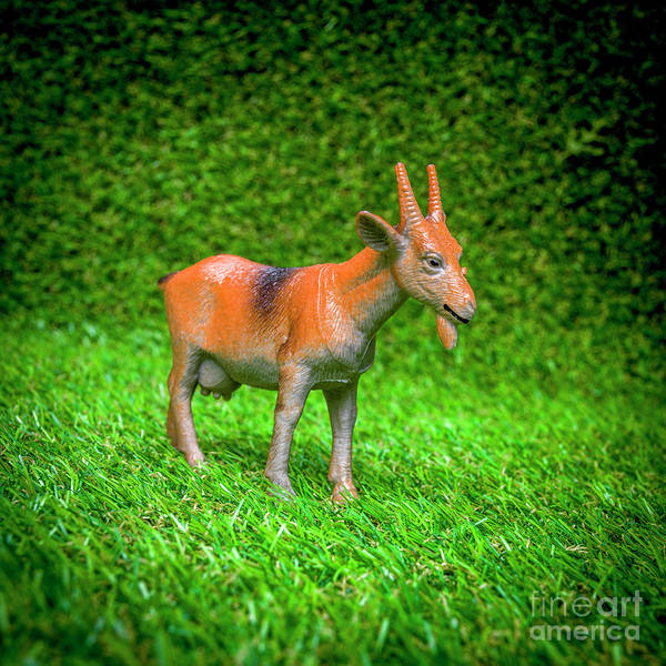 Wall Art - Photograph - Goat Figurine by Bernard Jaubert