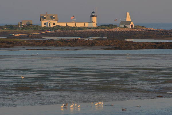 Wall Art - Photograph - Goat Island Lighthouse And Egrets At Low Tide by John Burk