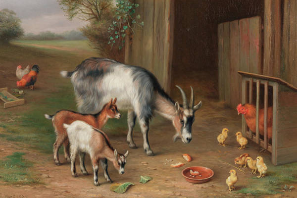 Goats And Chickens In A Farmyard Art Print
