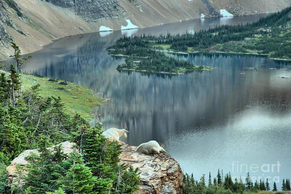 Photograph - Goats Overlooking Hidden Lake by Adam Jewell
