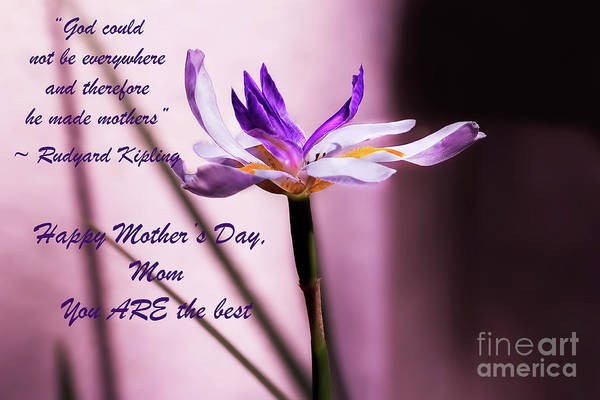 Photograph - God Could Not Be Everywhere And Therefore He Made Mothers by Kay Brewer