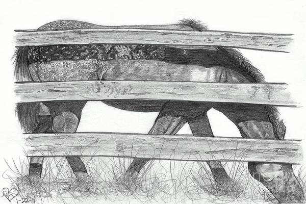 Appaloosa Drawing - Goin' For The Greener Grass by Becky Eileen Eller