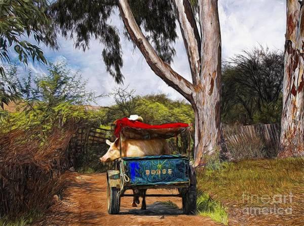Photograph - Going For A Ride by John Kolenberg