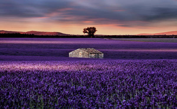 Home Field Photograph - Going Home by Jorge Maia
