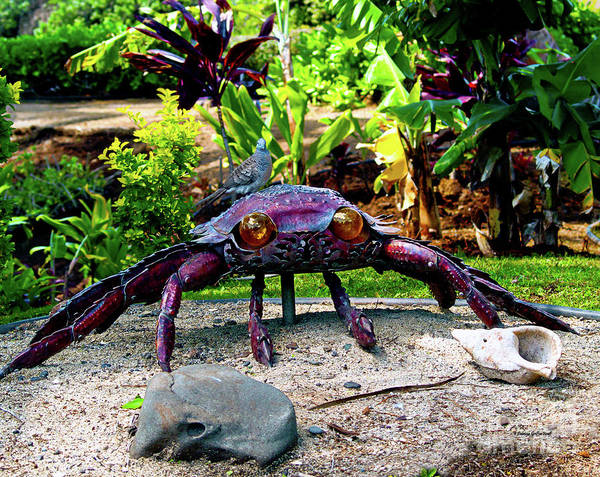 Photograph - Going Piggyback On A Crab by Patricia Griffin Brett