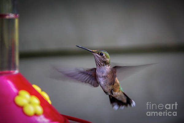 Photograph - Going To Fly Now by Jon Burch Photography