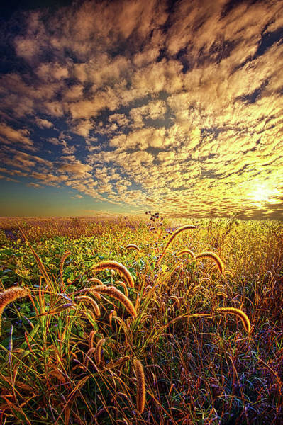 Photograph - Going To Sleep by Phil Koch