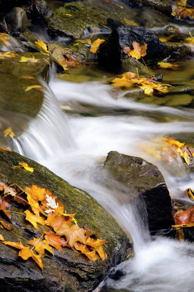 Photograph - Peaceful Autumn Creek by Christina Rollo