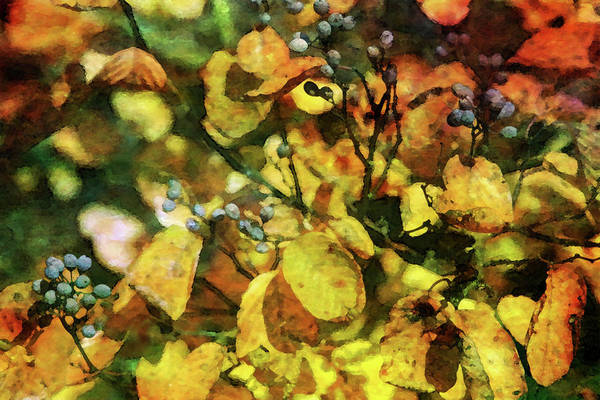Photograph - Gold And Fruit 7179 Dp_2 by Steven Ward