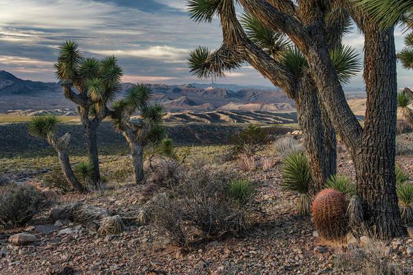 Photograph - Gold Butte Desert by Leland D Howard