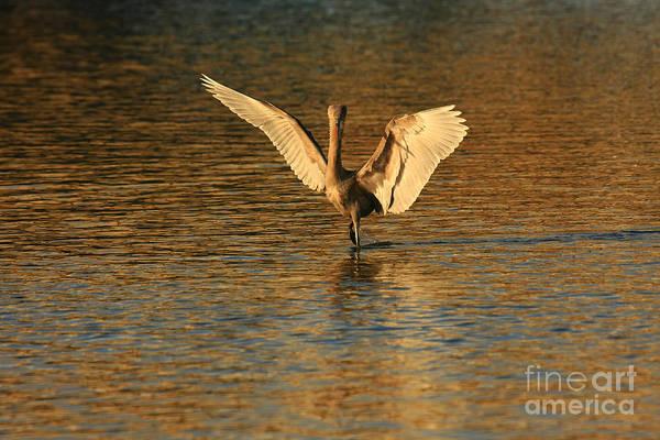 Photograph - Gold Dancer by John F Tsumas