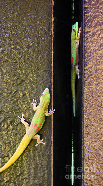 Photograph - Gold Dusted Day Gecko by Jennifer Robin