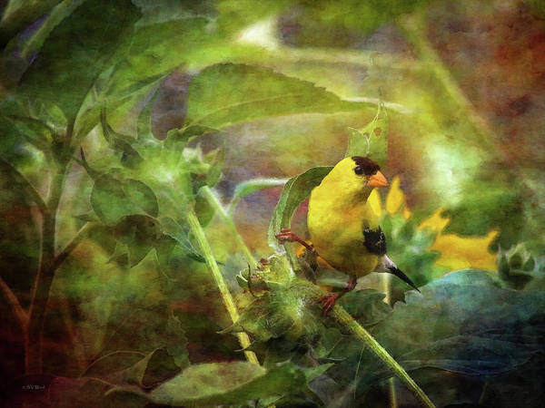 Photograph - Gold Finch 4403 Idp_2 by Steven Ward