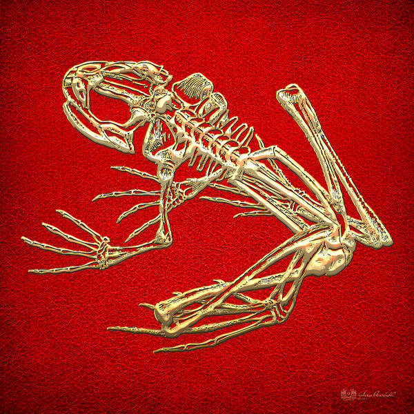 Artwork Wall Art - Photograph - Gold Frog Skeleton On Red Leather by Serge Averbukh