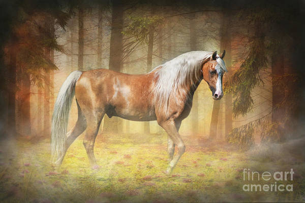 Palomino Photograph - Gold In The Mist by Michelle Wrighton