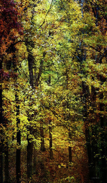 Photograph - Gold Leaf Forest 6543 Idp_2 by Steven Ward