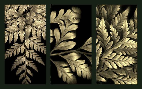 Photograph - Gold Leaf Triptych by Jessica Jenney