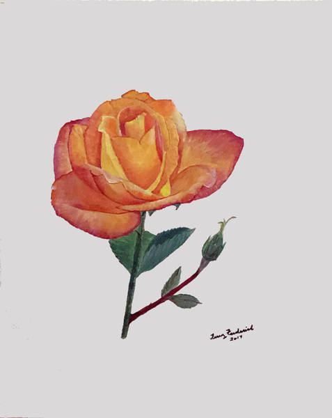 Painting - Gold Medal Rose by Terry Frederick