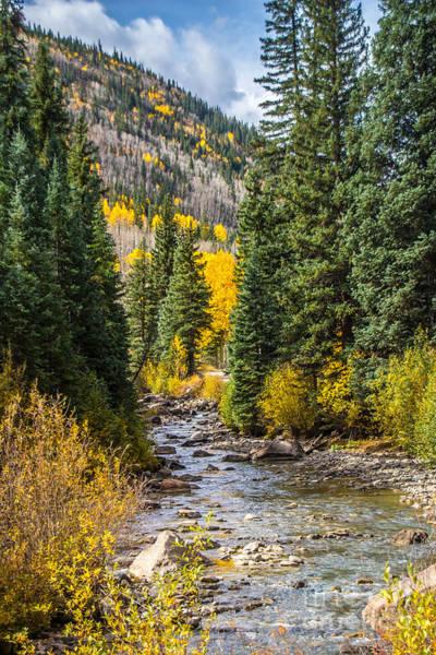 Photograph - Gold On Henson Creek by Jim McCain