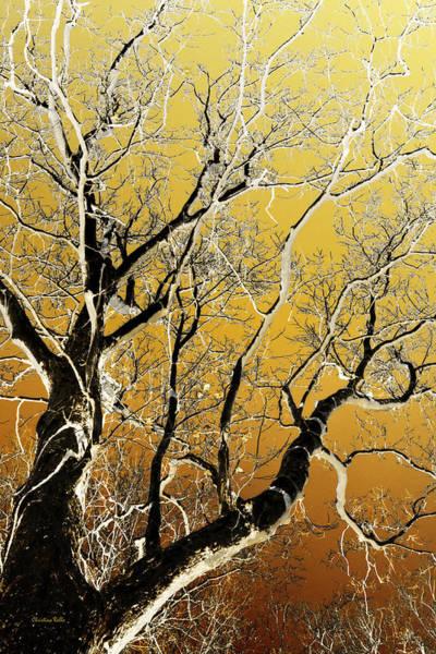 Mixed Media - Bare Branches Sycamore Tree Art by Christina Rollo
